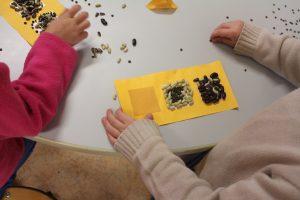 Découverte des graines en maternelle