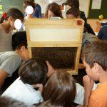 Découverte des abeilles à l'école